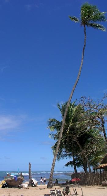 brasil-praia-do-forte-001.jpg
